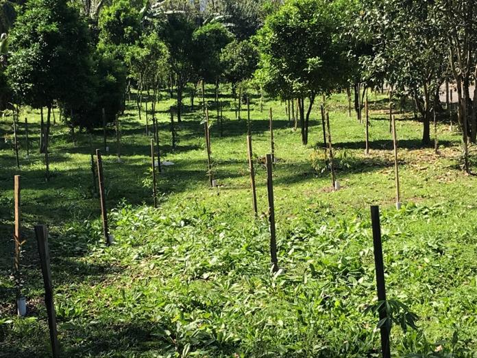 Projeto Carbono Compensado já plantou cerca de 7.400 árvores
